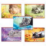 Альбом для рисования, 20 л., HATBER, обложка мелованный картон, 100 г/<wbr/>м<sup>2</sup>, «Котята» (5 видов)