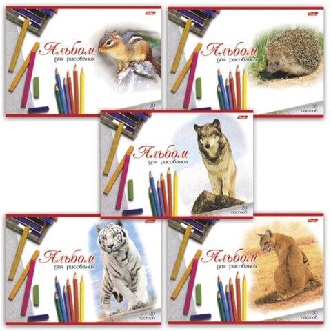 Альбом для рисования, 20 л., HATBER, обложка мелованный картон, 100 г/<wbr/>м<sup>2</sup>, «Животные»