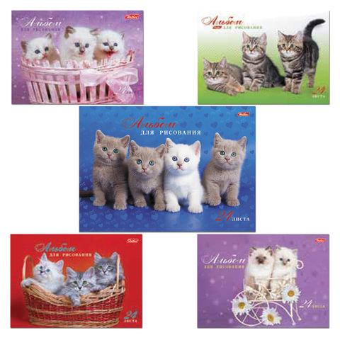 """Альбом для рисования, 24 л., HATBER, спираль, обложка мелованный картон, 100 г/м2, """"Милые котята"""" (5 видов), 24А4Всп"""