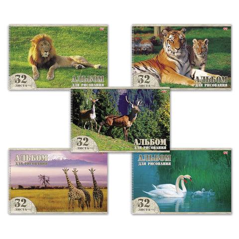 Альбом для рисования, 32 л., HATBER VK, спираль, обложка мелованный картон, 100 г/<wbr/>м<sup>2</sup>, «Животный мир» (5 видов)