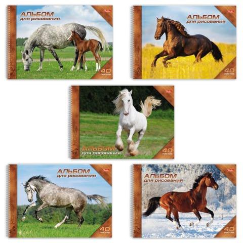 Альбом для рисования 40 л., HATBER, спираль, обложка мелованный картон, 100 г/<wbr/>м<sup>2</sup>, «Horses» («Лошади»)