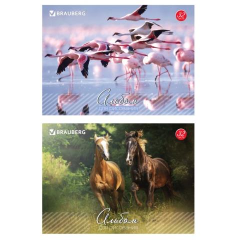 Альбом для рисования, 32 л., BRAUBERG (БРАУБЕРГ), обложка мелованный картон, «Живая природа», 2 вида