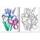 Книжка-раскраска А5, 8 л., HATBER, Первые уроки, «Садовые цветы»