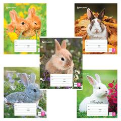 Тетрадь 12 листов, клетка, обложка мелованный картон, блок офсет белый, «Милые кролики», BRAUBERG