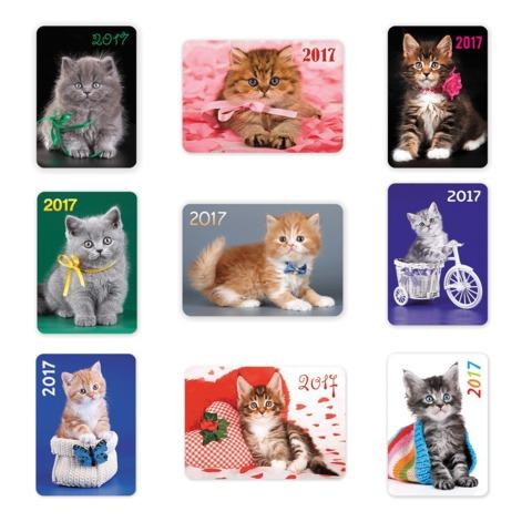 Календарь карманный на 2017 г., HATBER, 7×10 см, лакированный, «Милые Котята»