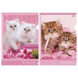 Папка-уголок с рисунком HATBER HD, А4, «Нежные котята», ассорти, 0,18 мм, AG4