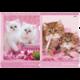 Папка-уголок с рисунком HATBER HD, А4, «Нежные котята», ассорти, 0,18 мм