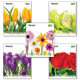 Тетрадь 48 л. BRAUBERG (БРАУБЕРГ), клетка, обложка мелованный картон, «Full Blossom» («Цветы»), 5 видов