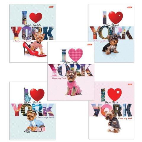 Тетрадь 48 л., HATBER, клетка, выборочный лак, «I love York» («Собаки»), 48Т5вмB1