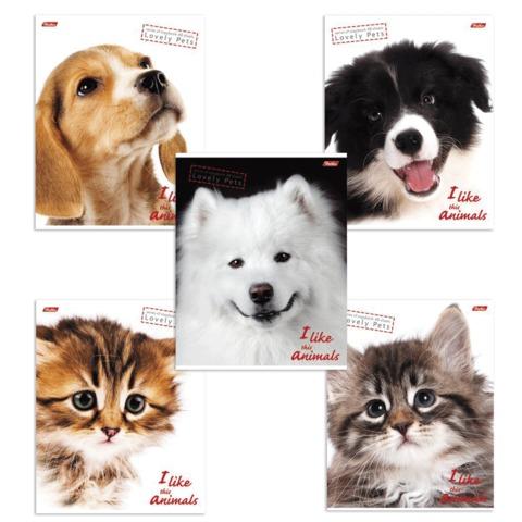 Тетрадь 48 л., HATBER, клетка, обложка мелованный картон, «I Like Animals» («Животные»)