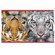 Тетрадь 96 л., HATBER, двойная, клетка, обложка мелованный картон, «Тигр»