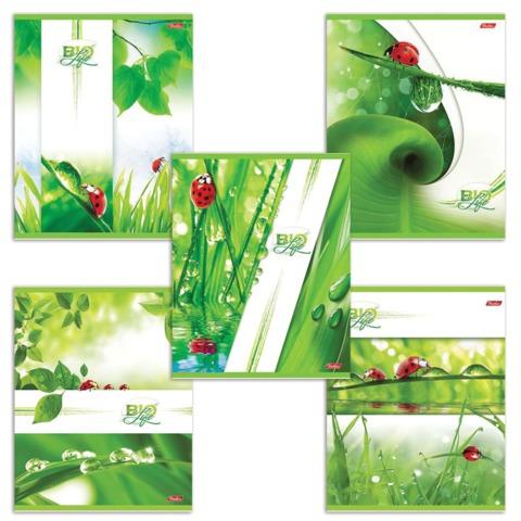 """Тетрадь 96 л., HATBER, клетка, обложка мелованный картон, """"Bio Life"""" (""""Листья""""), 96Т5B1"""