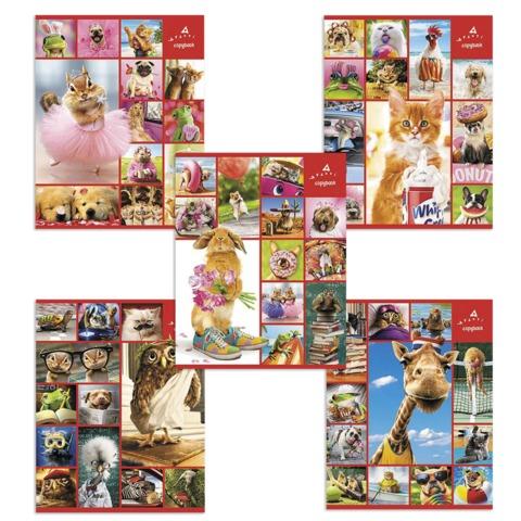 Тетрадь 48 л., HATBER, клетка, мелованный картон обложка, «Стоп-кадр — Выпуск №2», (AVANTI)