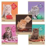 Тетрадь 48 л., HATBER, линия, обложка мелованный картон, «Котята», 48Т5В2