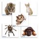 Коврик для мыши DEFENDER, шелк+резина, 230×190×1,6 мм, 10 видов