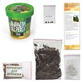 Набор для выращивания растений ВЫРАСТИ ДЕРЕВО! «Кедр Сибирский» (банка, грунт, семена)