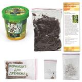 Набор для выращивания растений ВЫРАСТИ ДЕРЕВО! «Пихта Вича» (банка, грунт, семена)