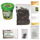 Набор для выращивания растений ВЫРАСТИ ДЕРЕВО! «Орех Маньчжурский» (банка, грунт, семена)