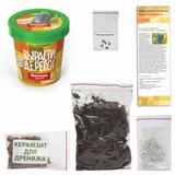 Набор для выращивания растений ВЫРАСТИ ДЕРЕВО! «Виноград амурский» (банка, грунт, семена)